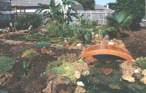Pond Rushes - Low Maintenance Ponding